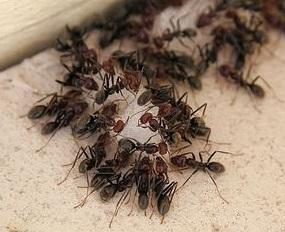 Уничтожение муравьев Королев