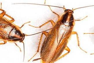 Уничтожение тараканов Мытищи и в Мытищинском районе