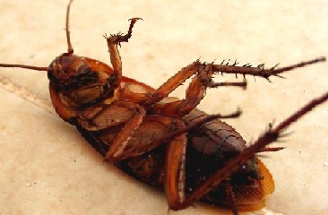 Уничтожение тараканов в Жуковском