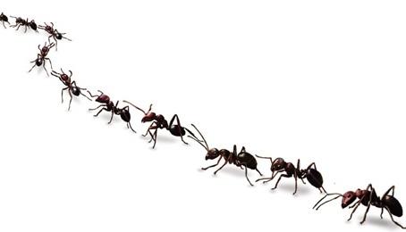 Уничтожение муравьев Лосино-Петровский и Монино