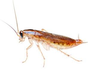 Уничтожение тараканов Фрязино