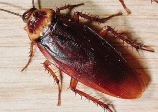 Уничтожение тараканов Лосино-Петровский