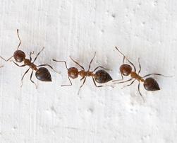 Уничтожение муравьев в Красногорске и Красногорском районе