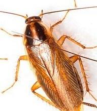 Уничтожение тараканов Хотьково