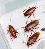 уничтожение тараканов Химки