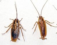 уничтожение тараканов Электроугли