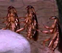 уничтожение тараканов Котельники
