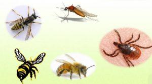 unichtogenie-nasekomix-v-pomechenii